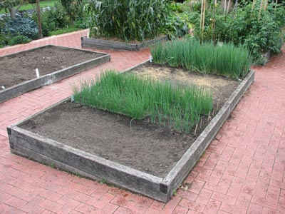 Why use raised vegetable garden beds